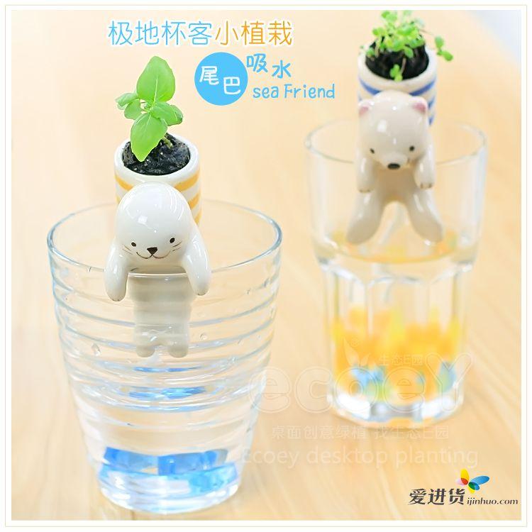 新品上线 可爱极地杯客小动物迷你水培植物盆栽绿植 桌面创意植载