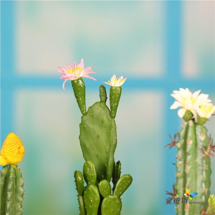 家居装饰 仙人掌造型 可爱美丽 仿真盆栽